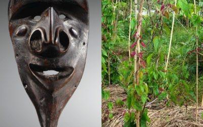 Masques et culte de l'igname au Vanuatu