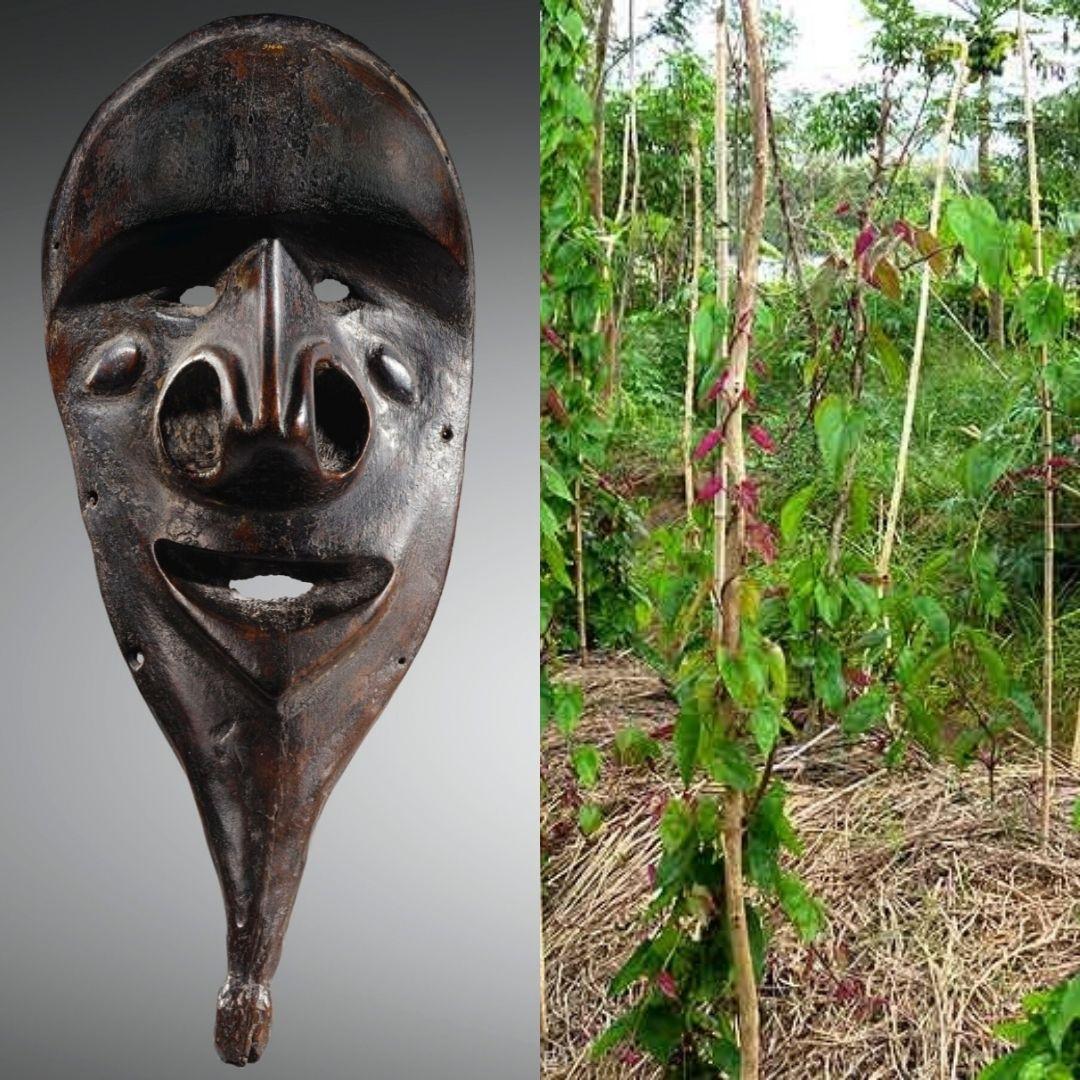 masque et culture de l'igname