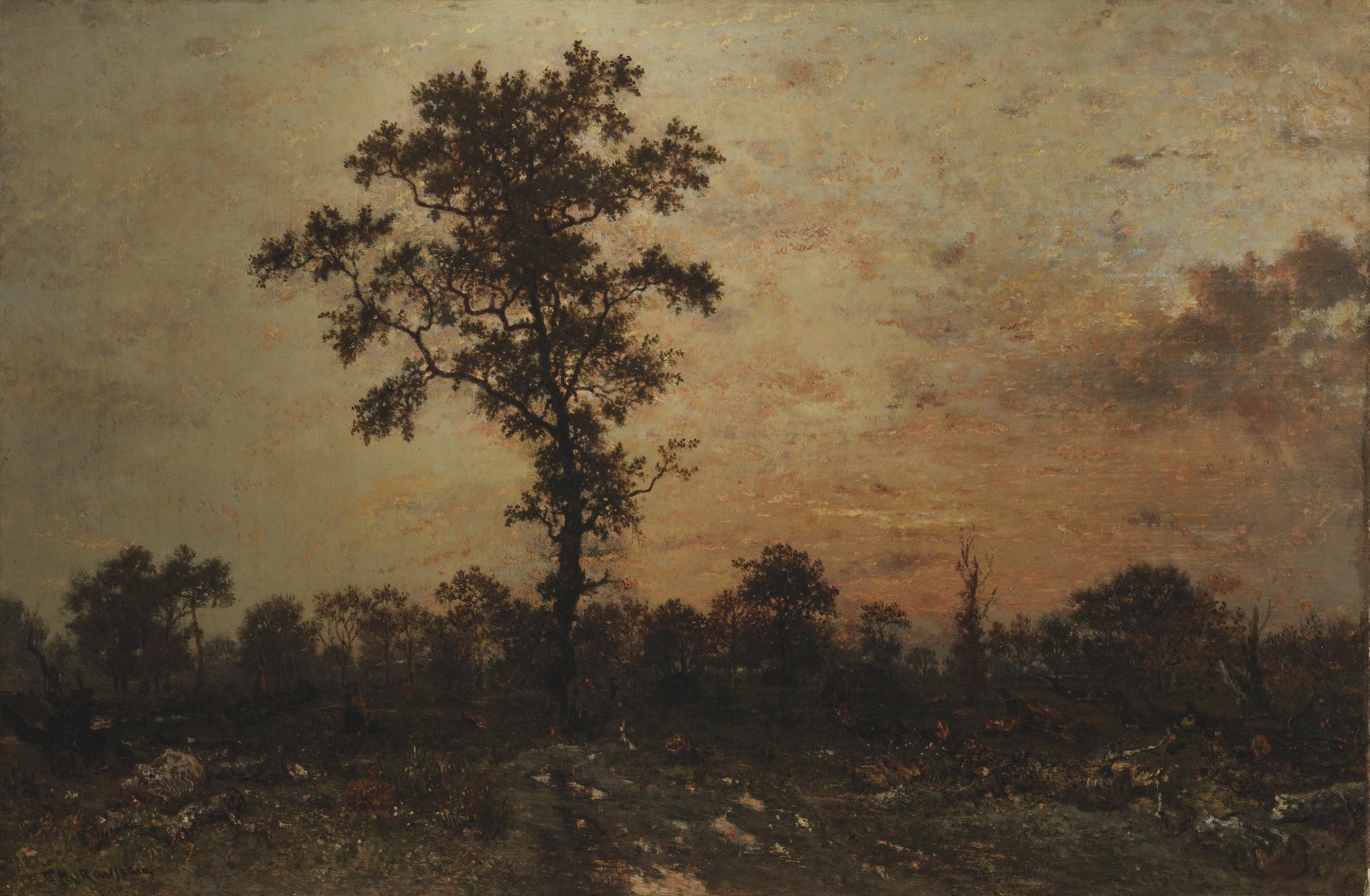 soleil couchant forêt de Fontainebleau